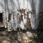 Selling Reminders - Termite Damage